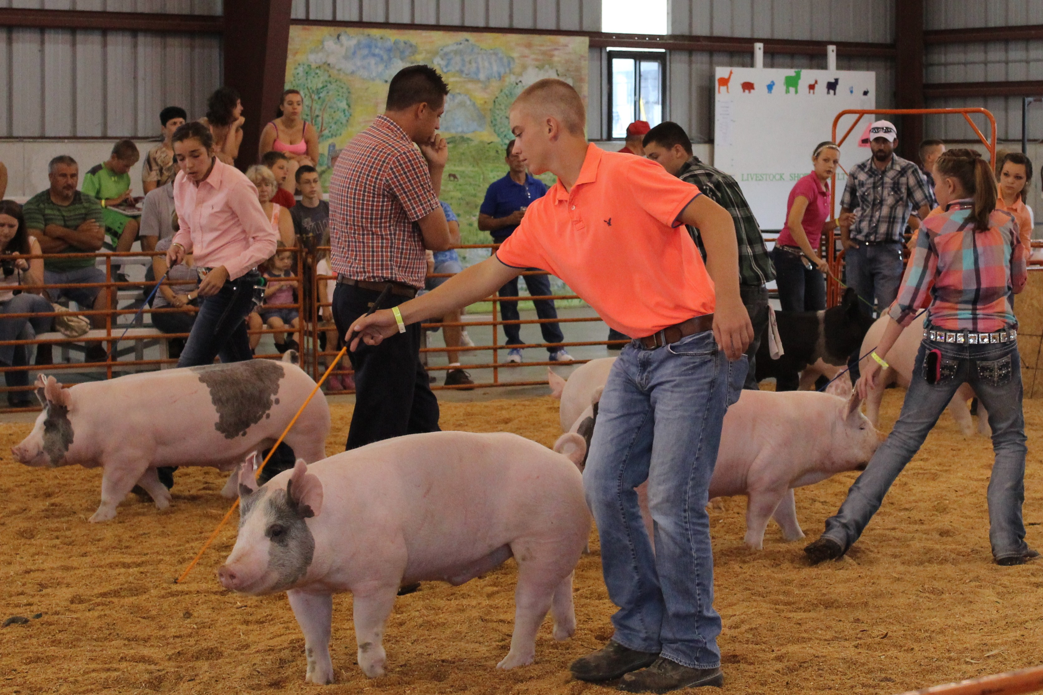 Who knew hogs liked marshmallows? | Crawford County Now