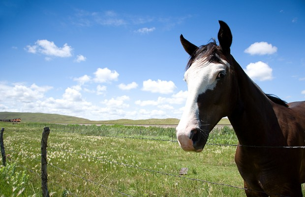 eastern and western equine encephalitis